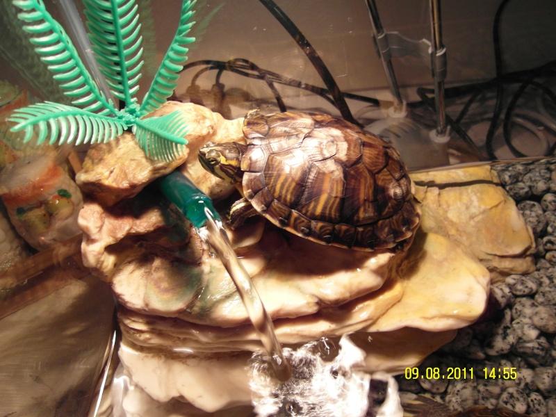 vi presento i miei amori... le mie tartarughine  Sam_0111