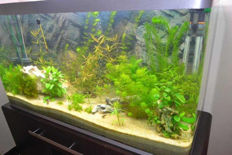mon nouvel aquarium 320L - Page 2 05-02-10