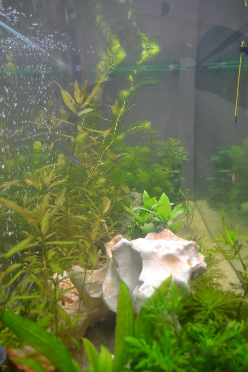 mon nouvel aquarium 320L - Page 2 05-02-11