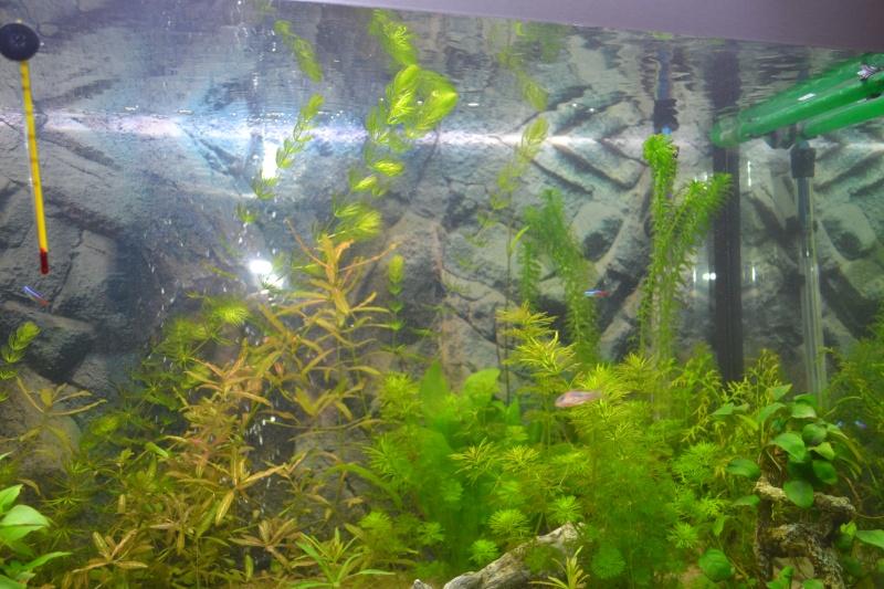 mon nouvel aquarium 320L - Page 2 05-02-12