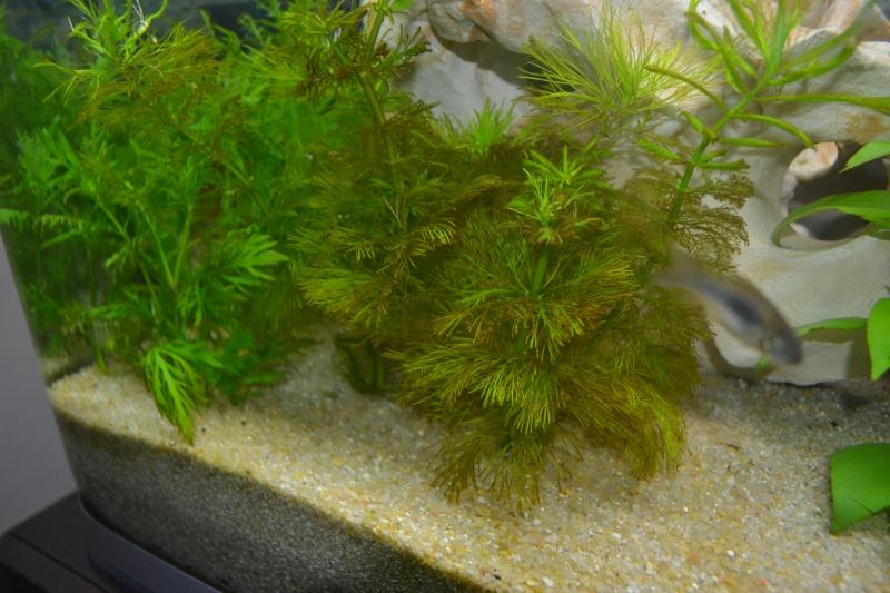 mon nouvel aquarium 320L - Page 2 05-02-13