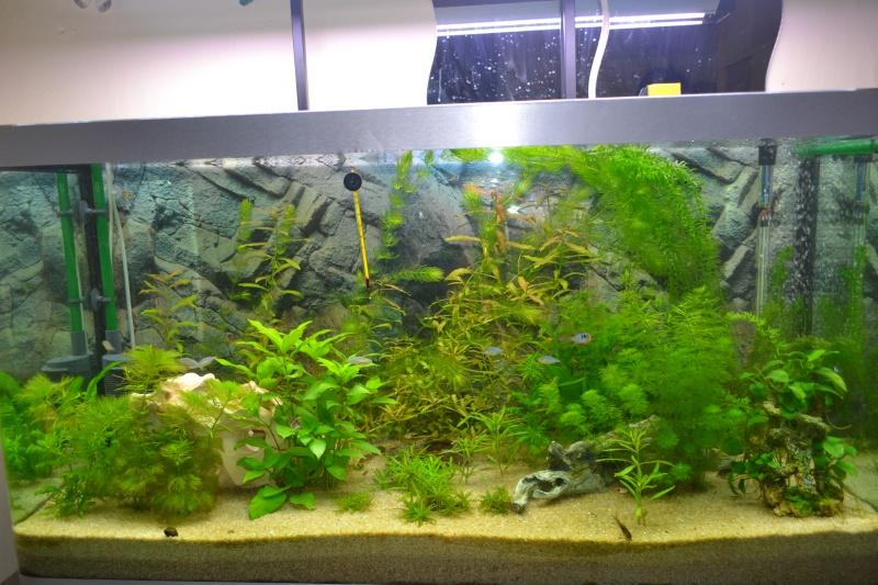 mon aquarium 320l 13-02-12