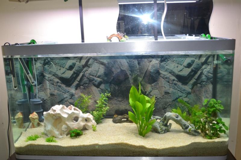mon aquarium 320l 21-01-11