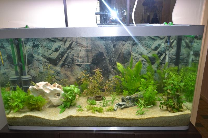 mon nouvel aquarium 320L - Page 2 28-01_10