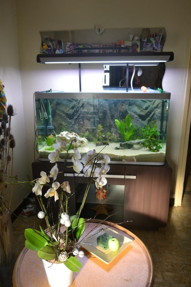 mon nouvel aquarium 320L 320l_d10
