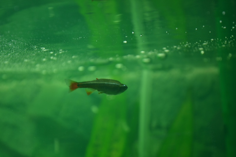 poissons qui gonlent Dsc_0014