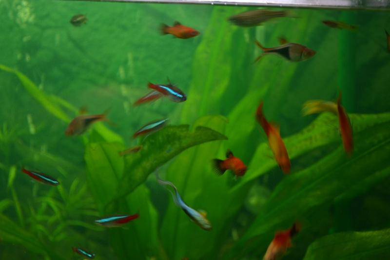 poissons qui gonlent Dsc_0016
