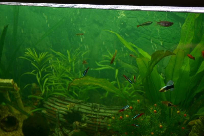 poissons qui gonlent Dsc_0017