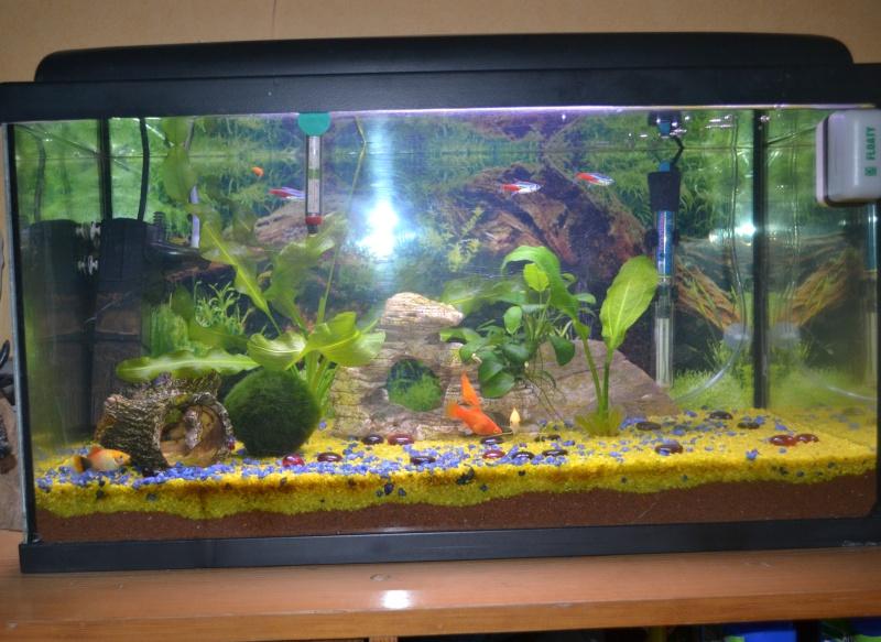 nounou pour poissons Dsc_1210