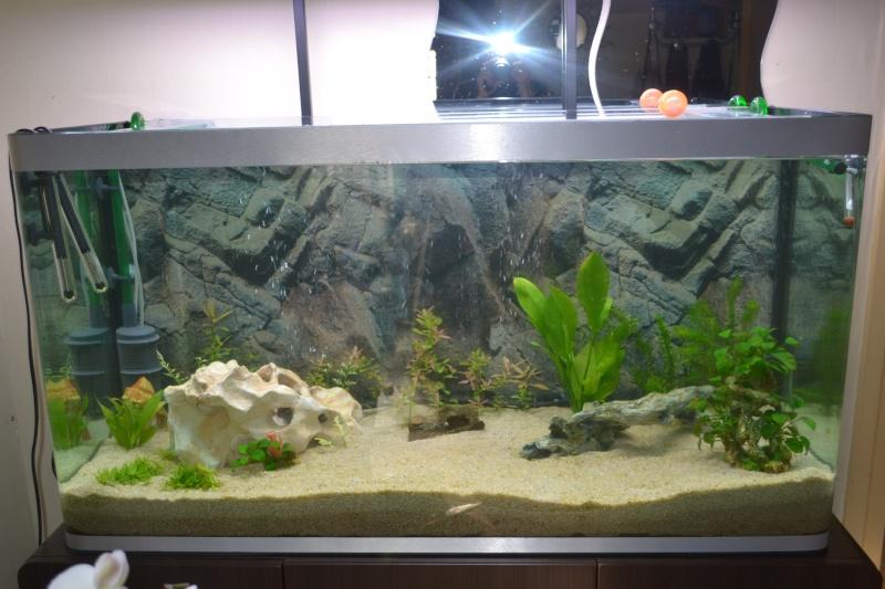 mon nouvel aquarium 320L Dsc_1212