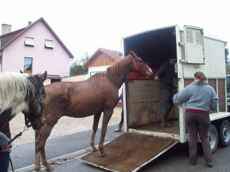 EXTREME URGENCE 8 chevaux - Page 2 101_0613
