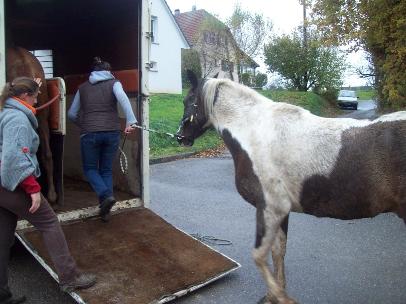 EXTREME URGENCE 8 chevaux - Page 2 101_0614