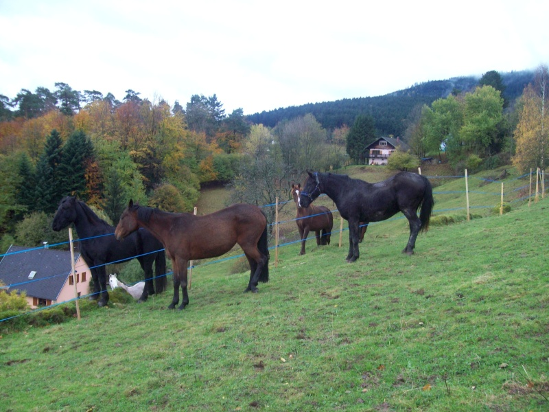EXTREME URGENCE 8 chevaux - Page 2 101_0618