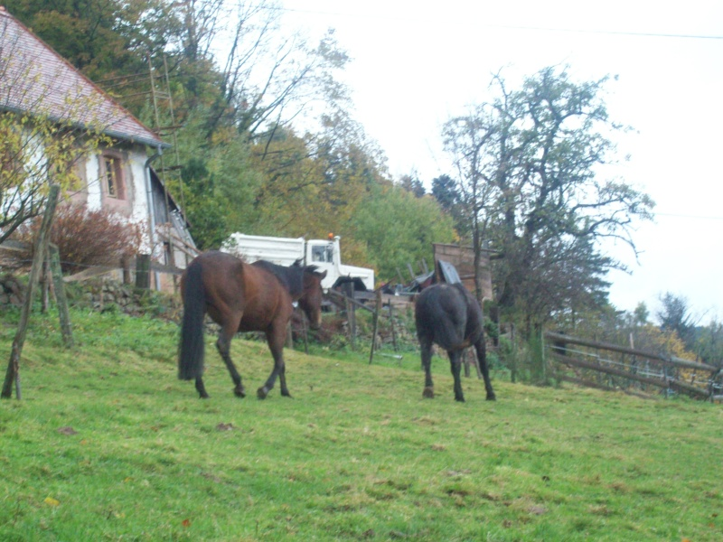 EXTREME URGENCE 8 chevaux - Page 2 101_0619