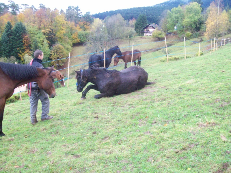 EXTREME URGENCE 8 chevaux - Page 2 101_0621