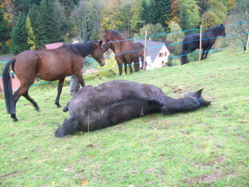 EXTREME URGENCE 8 chevaux - Page 2 101_0622