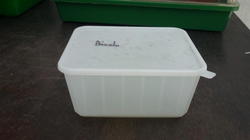 Bouture en eau Loulou0797 P1090639