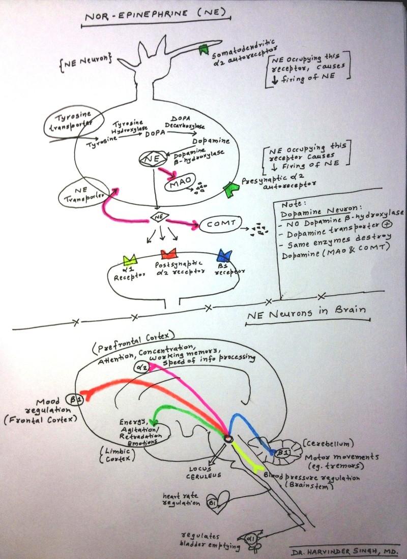 Schizophrenia- In Depth Explanation & Discussion Img_0111