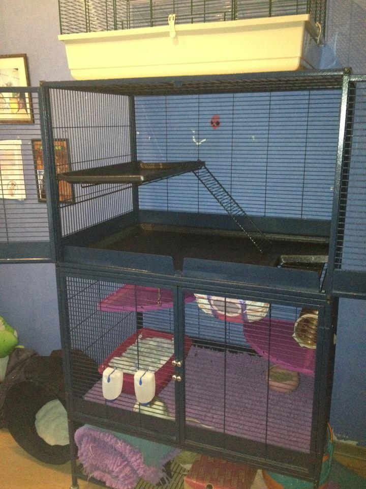 Vend cage royale suite (67) 53929410
