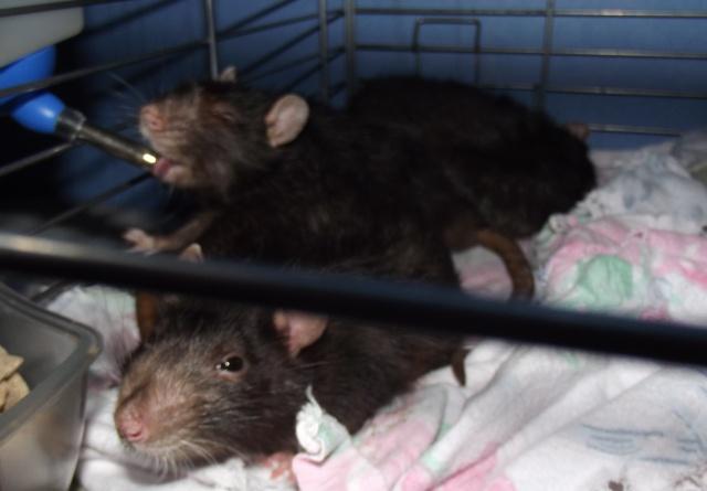 Dexter, Nico et Baloo Dscf1514