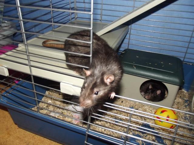 Dexter, Nico et Baloo Dscf1515
