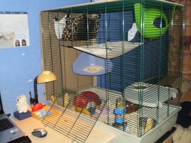 Cages et  accessoires ( 67 ) P3300010