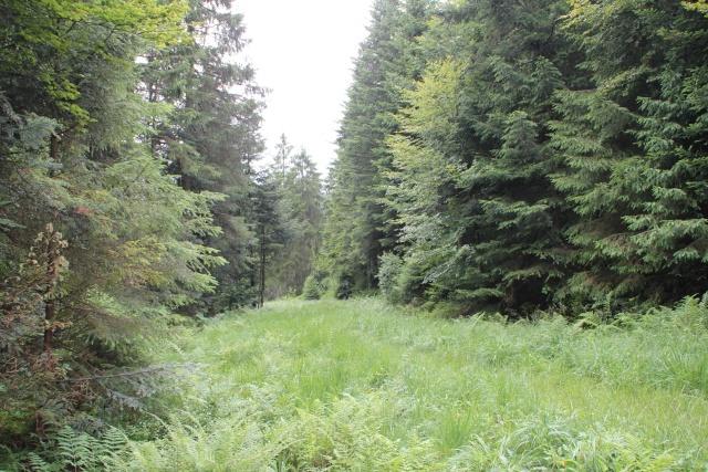 Tourbières et un fossé   Img_9411