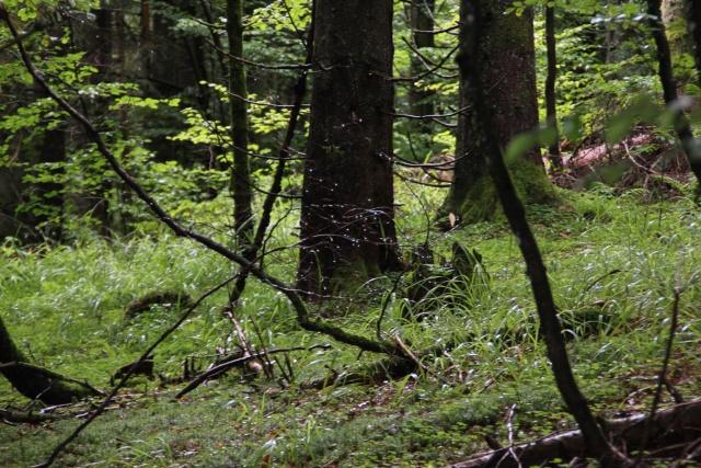 Tourbières et un fossé   Img_9413