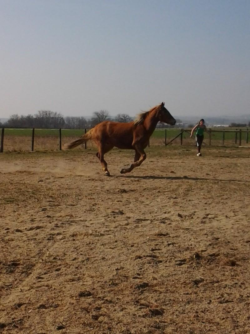 "Concours : ""cheval au galop"" GAGNANTE : TItâne Photo011"