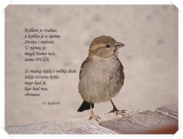 Ljubavna poezija na slici - Page 4 16696211