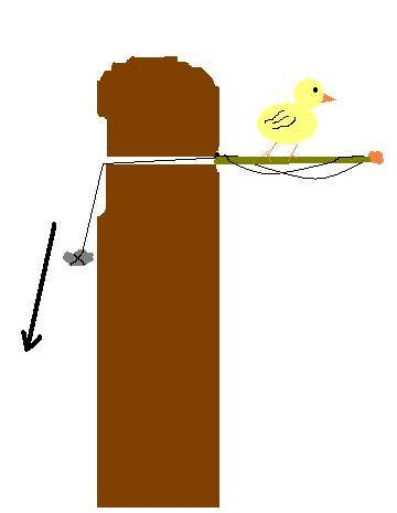 Les pièges à animaux - Page 2 Oiseau10