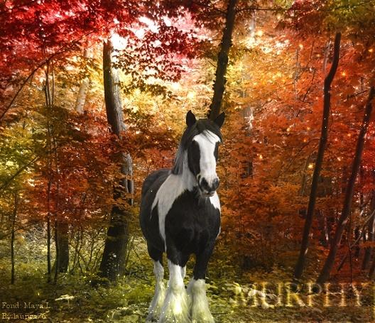 Murphy adulte. Spectr10