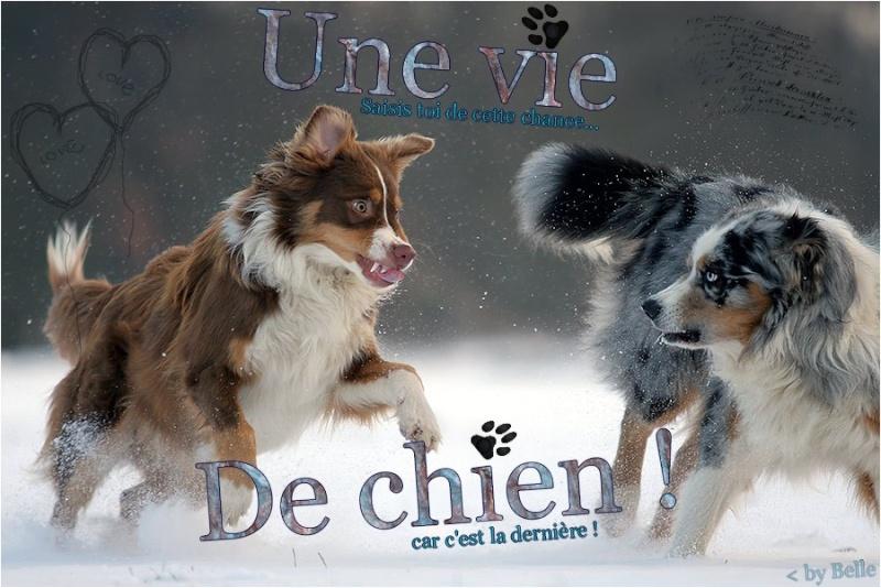Cadeaux pour Luna de Belle Chienv10
