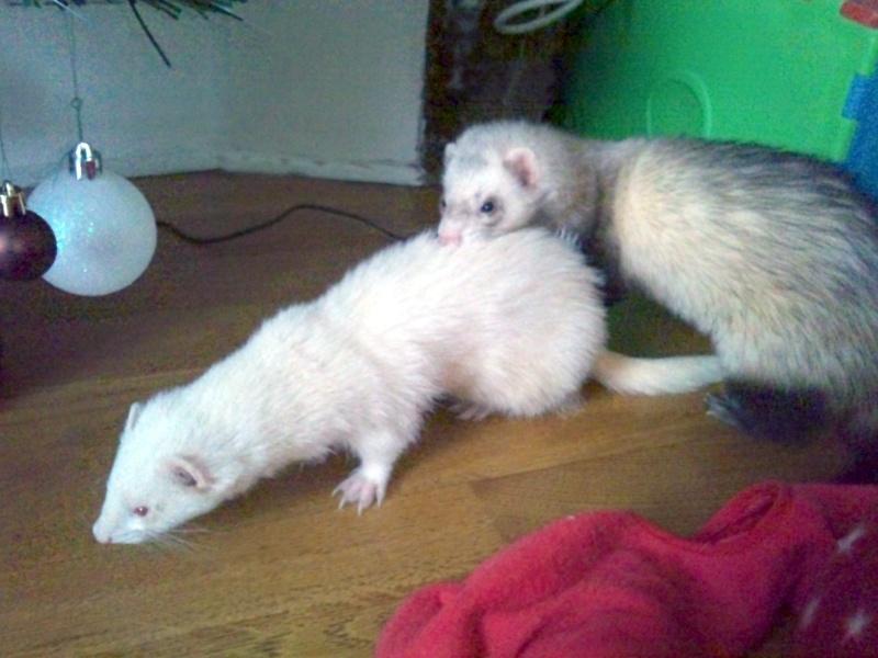 Lilou et furax :) 2011-112