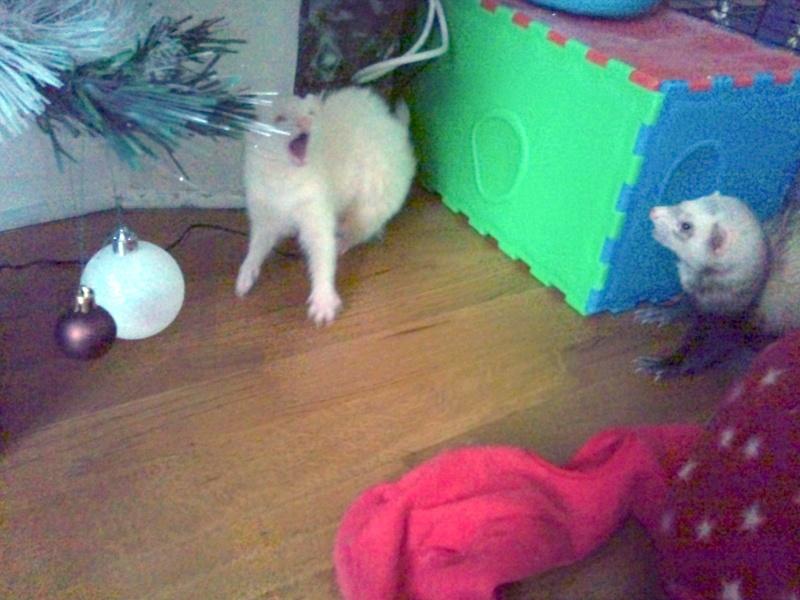 Lilou et furax :) 2011-113