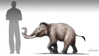 paléontologie mammouth pygmée nain forme naine Paléoloxodon creticus mammuthus creticus éléphantidés Proceedings of the Royal Society B forum mai 2012 Victoria Herridge Muséum d'Histoire naturelle de Londres Sicile Malte espèce insulaire