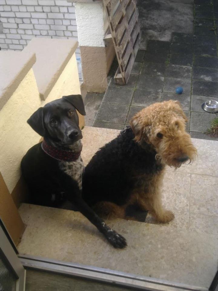 Rooney und sein Hundeonkel Billy Billy_11