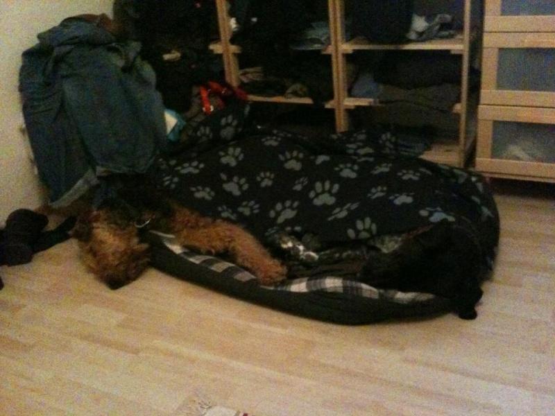 Rooney und sein Hundeonkel Billy Billy_12