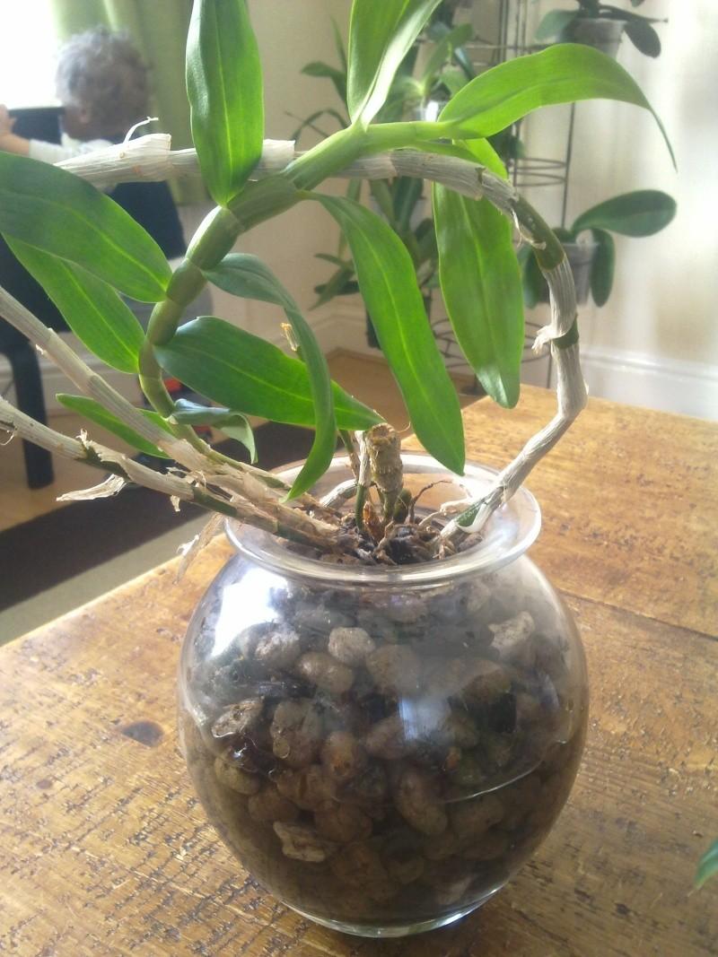 Uprawa wazonowa w keramzycie - Page 2 Dendro10
