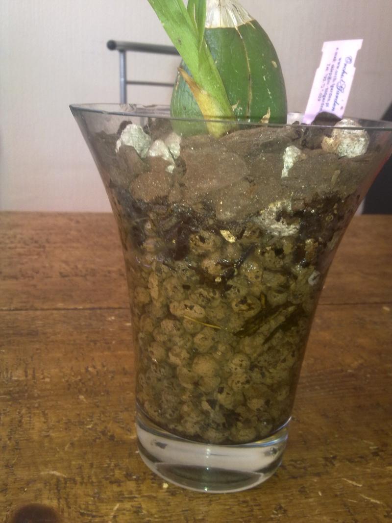 Uprawa wazonowa w keramzycie - Page 2 Per_el10