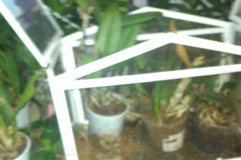 Uprawa wazonowa w keramzycie - Page 3 Szklar19