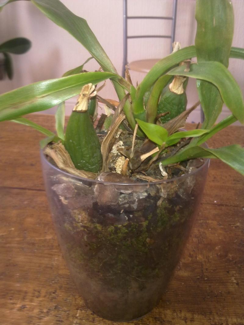 Uprawa wazonowa w keramzycie - Page 2 Zygope13