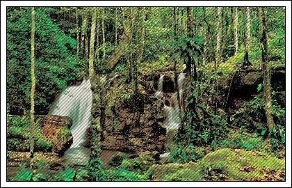 [Lugares] - Floresta 112