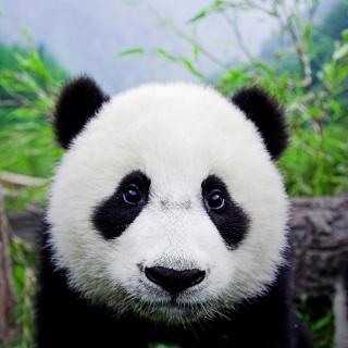 Seiko 6138-8020 à retaper Panda11