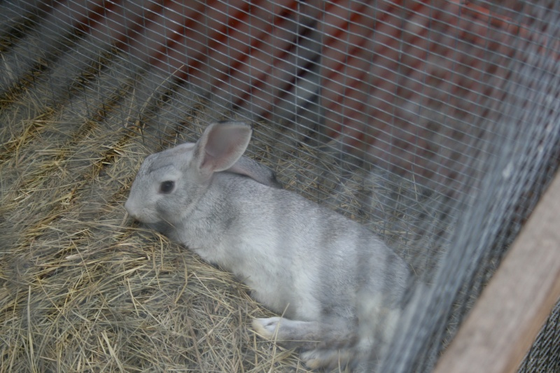 Some of my rabbit herd 01611