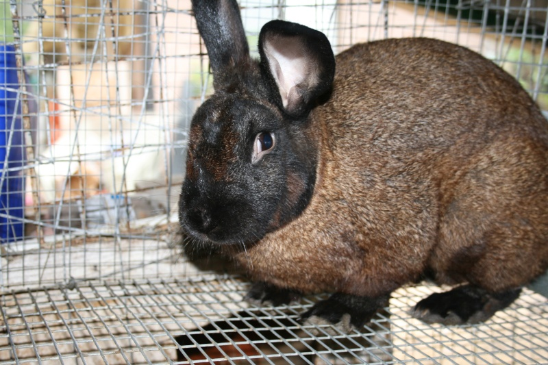 Some of my rabbit herd 02010