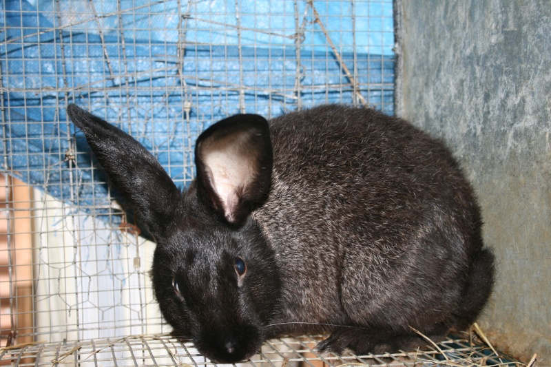 Some of my rabbit herd 02111