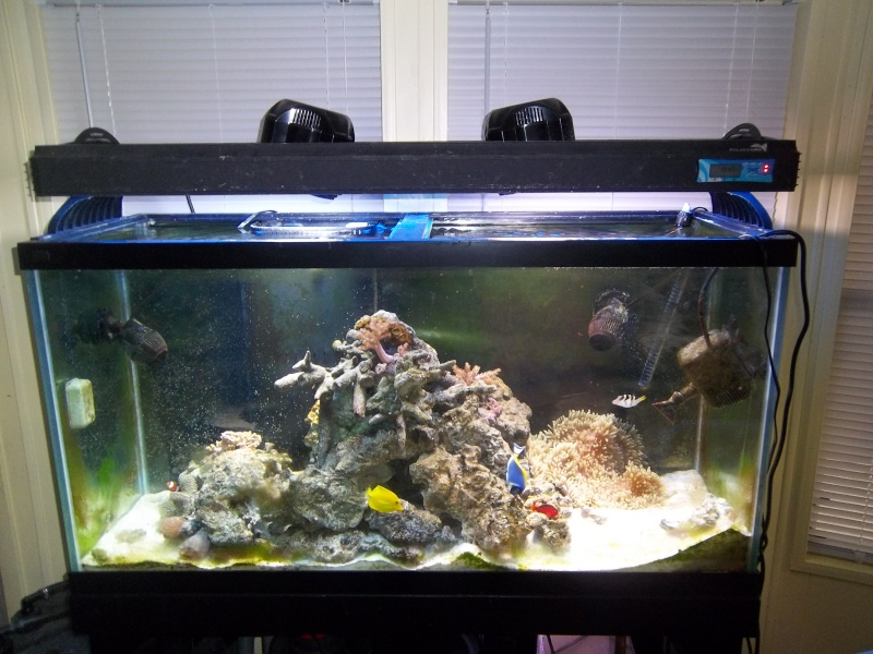 UPDATE: Pics of my saltwater tanks along with my seahorse tank Entire10