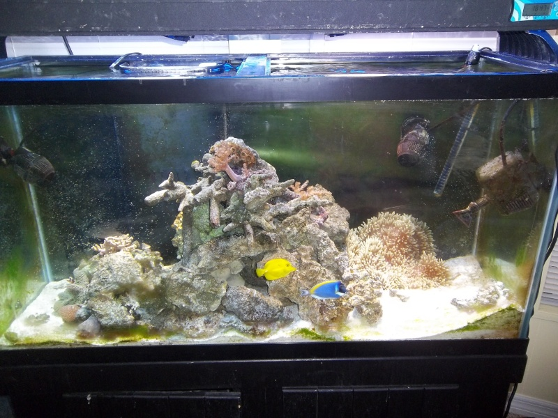 UPDATE: Pics of my saltwater tanks along with my seahorse tank Tank_s10