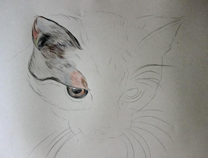 Katzenzeichnung Img_2110